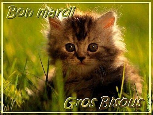 Bonjour, un chat/Nature § Bon Mardi à tous et toutes &
