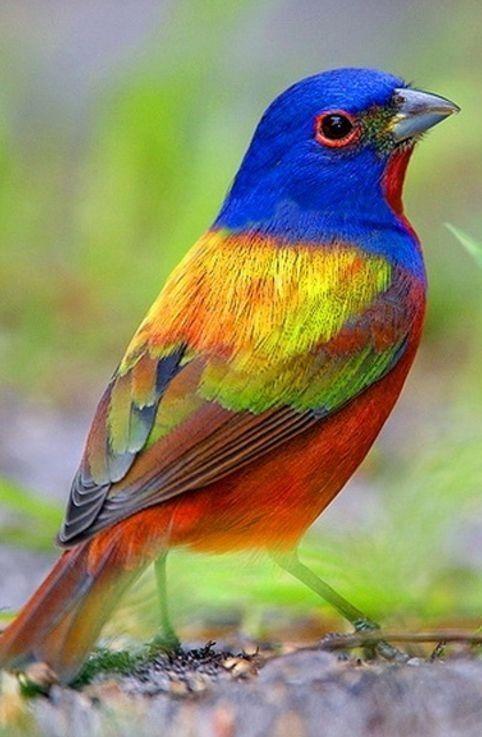 la nature un bel oiseau couleurs bon samedi