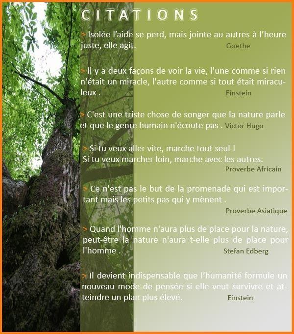 Citations De Bien Etre Développementpersonnel Music