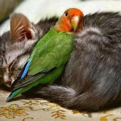 De belles images d'amitié 5fe9c907