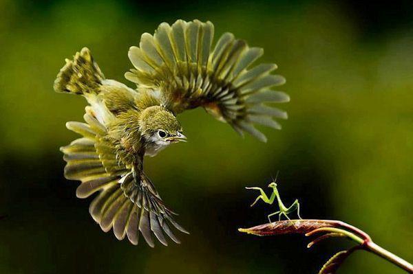Fabuleux Belle photo - Humour Insolite & Un oiseau! * FY81