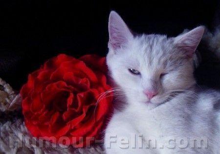 Bonjour !!! Big_8309-big-lolo180-3137-chat-animaux-coquet-salle-ardennes-624059