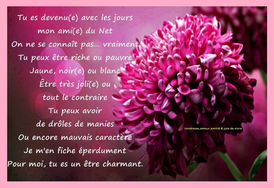 Une Fleur Belle Citation Amour Love