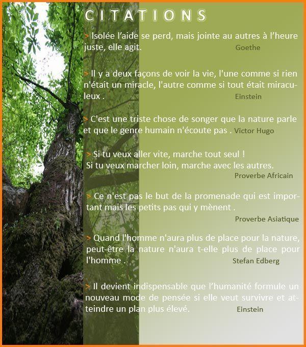 Citations De Bien Etre Developpementpersonnel Music