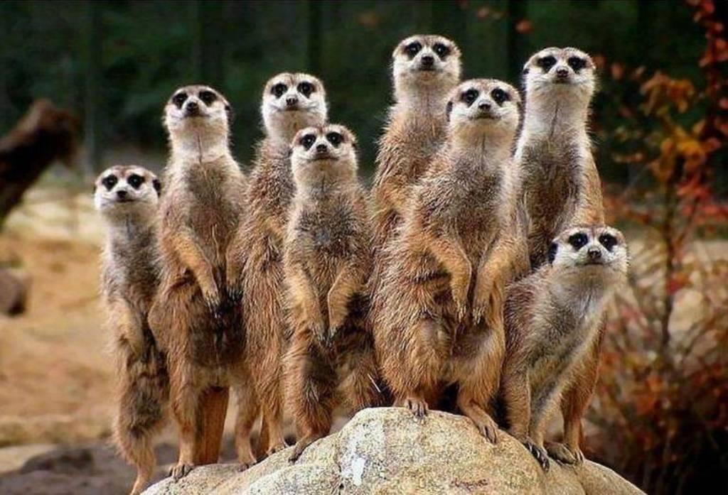 Quelques animaux sauvages bonne journ e ts ttes - Animaux wallpaper ...